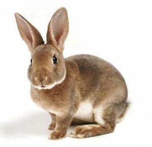 кролик2