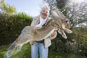 джефф кролик