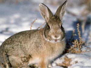 факторы жизни кроликов