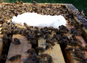 пчелы уход весной