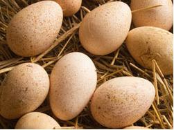 яйца цесарки при болезнях