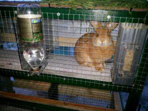 обустройство клетки для кроликов