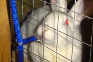 поилка для кролей