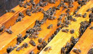убираем пчел на зиму