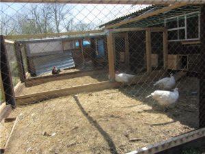 строительство птичника
