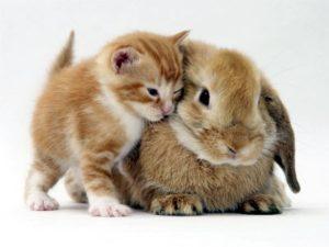 кролики с другими питомцами