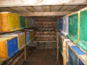 зимовка в подполье