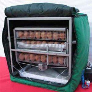 яйца цесарок в инуцбаторе