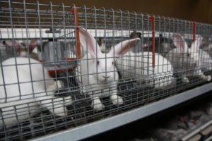 клетка с кроликами