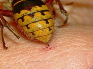 смертелен ли укус пчелы