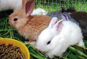 корм кроликам