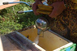 окуривание пчел