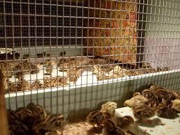 клетки с птицами