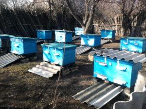 выставка пчел
