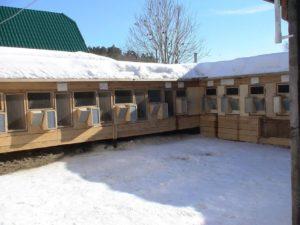 мини ферма для кроликов