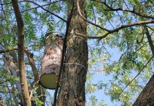 ловушка на дереве