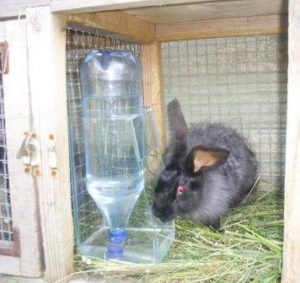поилки для кроликов из пластиковых бутылок