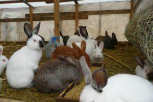 разные виды кроликов