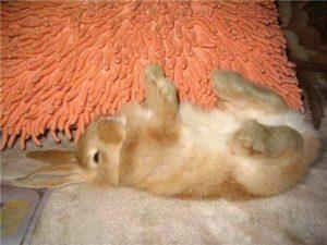 симптомы болезней кроликов