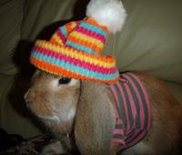 наряд для кролика