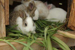 кормим кролей