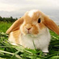 кролик в травке