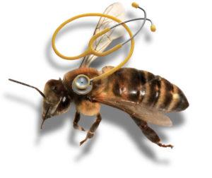 защитить пчел