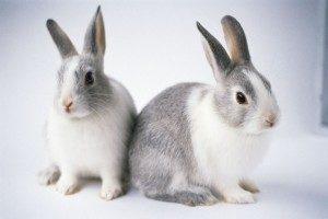 сколько живут кролики