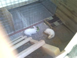 пол ямы для кроликов