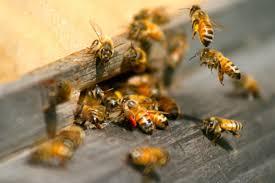 размещение пчел