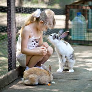 жизнь кроликов