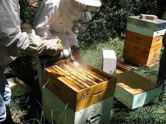 Обработка пчел против клеща