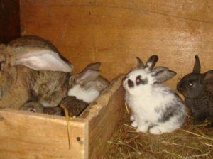 клетка для беременной крольчихи