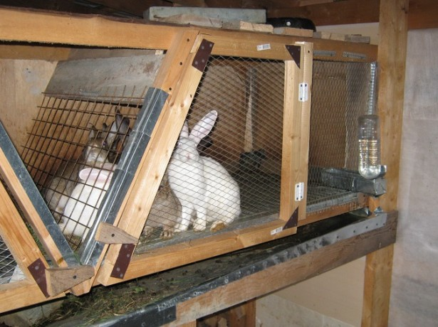 Как самим сделать клетку для кролика