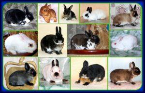 виды кроликов