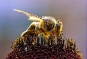 корм пчелам на зиму