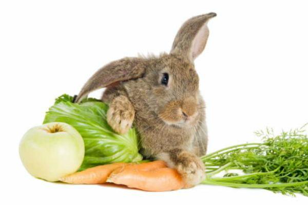Чем питается кролики в домашних условиях