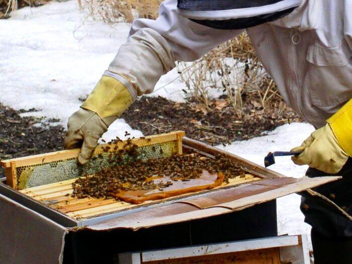 прикормка для пчел из меда
