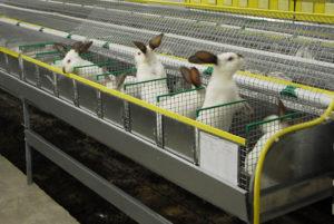 крупные клетки для кроликов