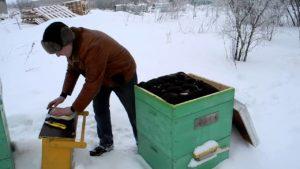 чем кормить зимой пчел