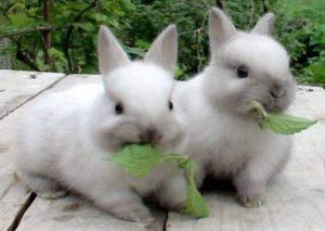 купить кролика декоративного