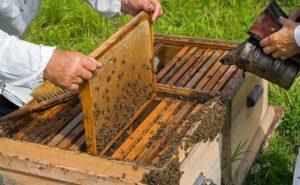 бипин обработка пчел