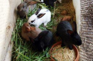 злаки для кроликов