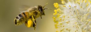 лето и пчелы