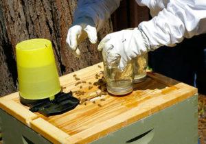 осенняя подкормка пчел медом