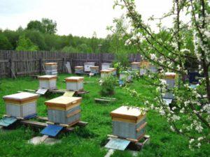 особенности содержания пчел