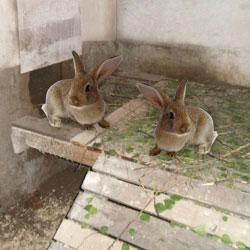 ловить кроликов в яме