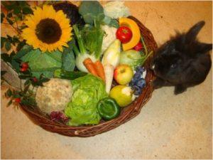 декоративные кролики питание1