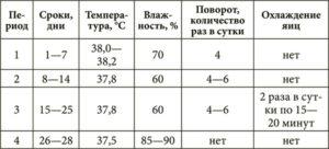 таблица инкубации перепелов