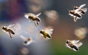 нападение пчелы